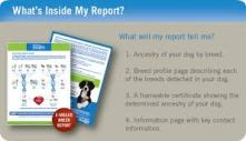 The Wisdom Panel canine DNA test is informative as well as fun for any dog owner.