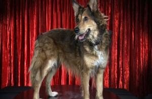 "Nellie the ""Wonderdog"" pre-makeover"
