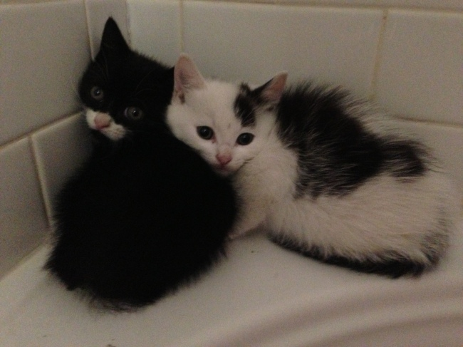 Two kittens need adoption ASAP. One is sweeter than the other.