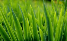 Brian Feldman, area resident and TruGreen expert shares the secret to optimally watering your lawn.