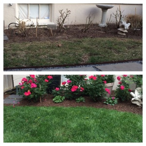 Before and six weeks after TruGreen professionals began managing my lawn. This is a high-traffic area my dog beats up. TruGreen's proprietary seed mix withstands my dog's best efforts.