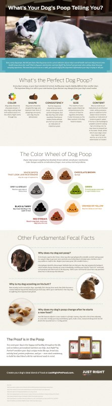 Courtesy of the experts at Just Right by Purina - the leading individualized dog food.
