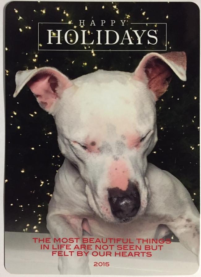 Holiday Card Truman 2015
